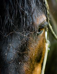 EFT for Horses